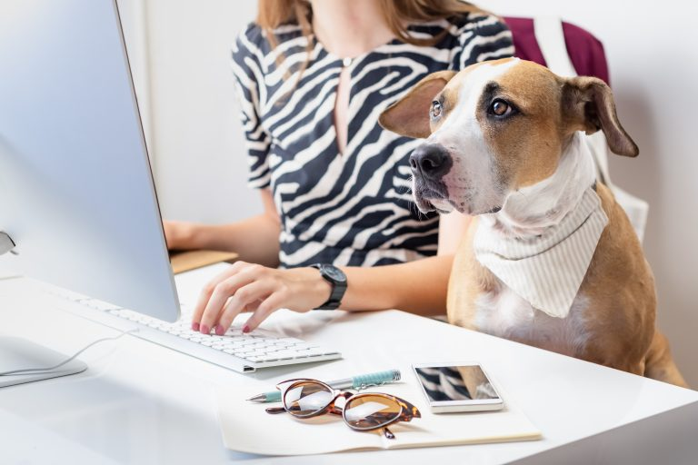 Why Dogs Are Customer Service Experts